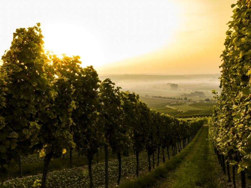 Lohnt sich eine hohe Energieeffizienz bei einem Weinkühlschrank